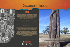 Panel - Scarred Trees