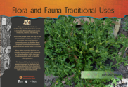 Panel - Traditional Uses of Flora and Fauna
