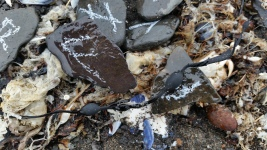 """Message from the shore: Incoming tide"" found objects, 2016"