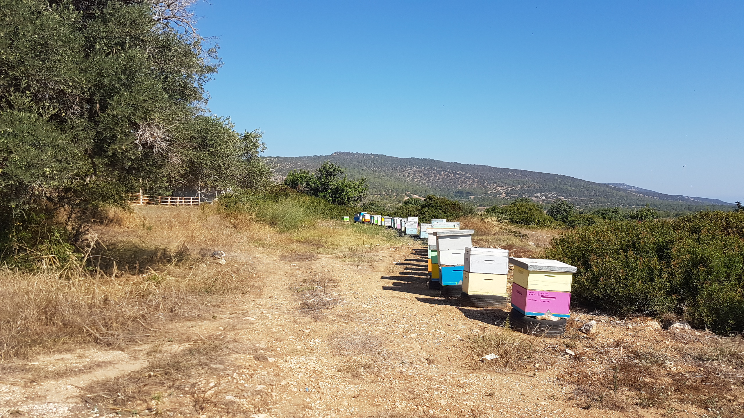 Bee hives in Neo Chorio