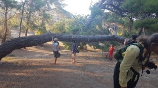Massive Cacao tree
