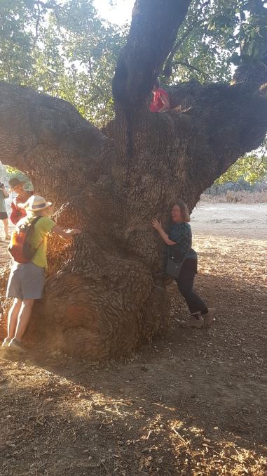 Hugging Trees