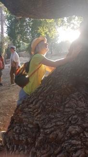 Oak Tree Elder
