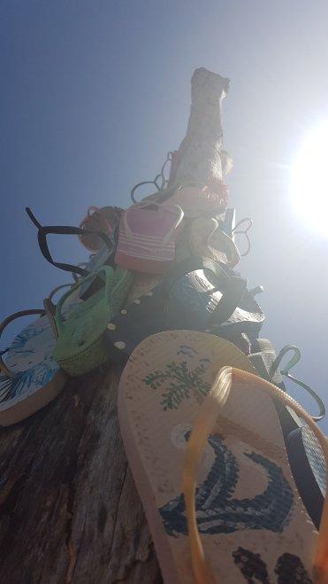 Thong tree, © Tracey M Benson 2019