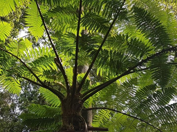Rainforest Gully © Tracey M Benson 2020